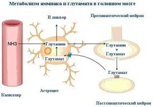 Гипераммониемия