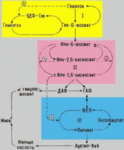 Активность ферментов второго субстратного цикла