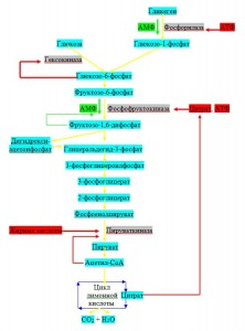 Регуляция гликолиза