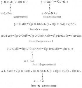 Синтез углеводной части гликолипидов и гликопротеинов
