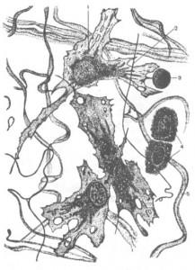 Роль углеводной части немембранных гликопротеинов