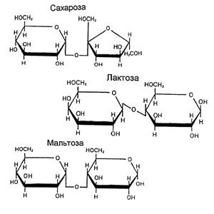 Обмен и функции углеводов