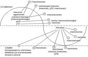 Регуляция обмена глюкозы и гликогена