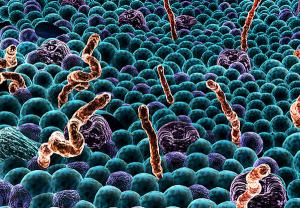 Молекулы межклеточной коммуникации