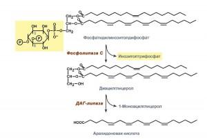 Путь инозитолтрисфосфат
