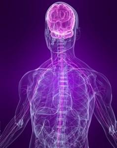 Роль нервной системы