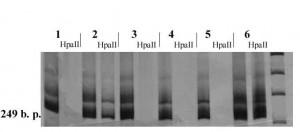 Промоторная область гена