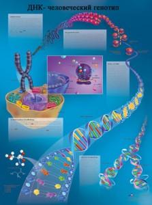 ДНК и наследственность