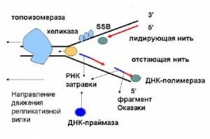 Механизм репликации
