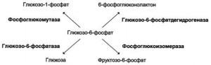 Метаболические и регуляторные ферменты