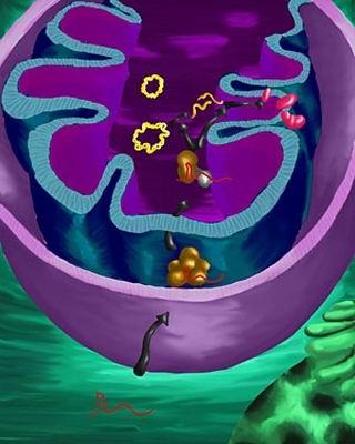 Полинуклеотидфосфорилаза