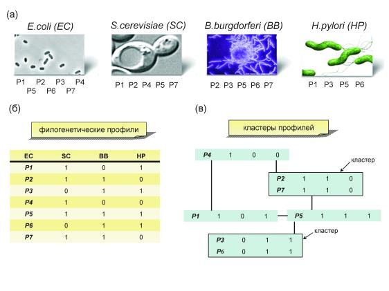 Изофункциональные белки