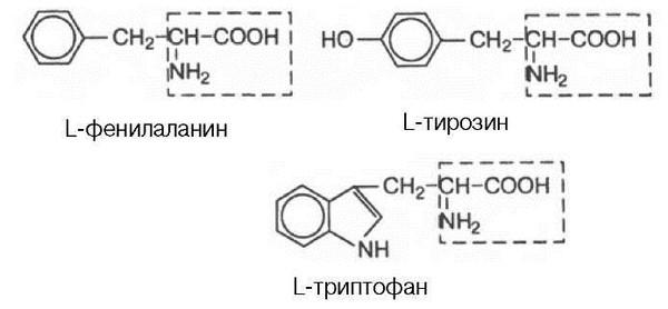 Аминокислотный состав индивидуальных белков